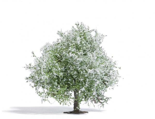 Apfelbaum 75, blühend H0